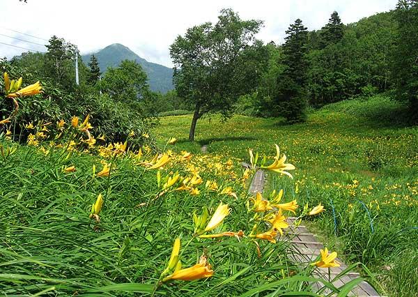 志賀高原 東館山高山植物園 −信...